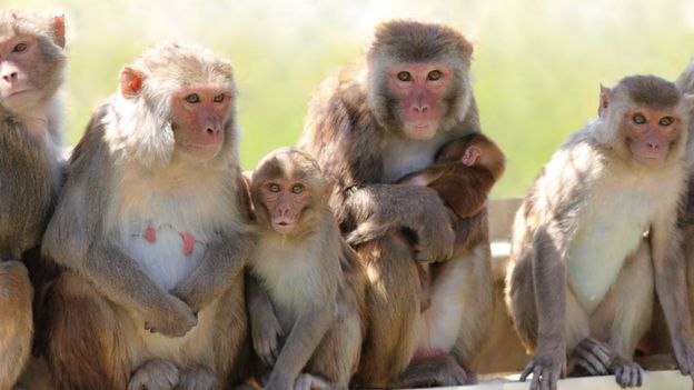 monkeys from the trial