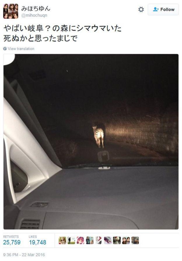 Tweet by Japanese Twitter user Mihochuqn on 23 March 2016 about a runaway zebra