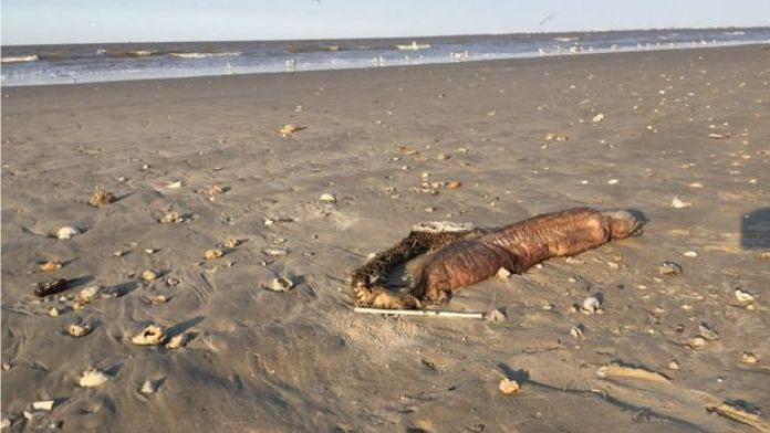 The eel is pictured on the beach