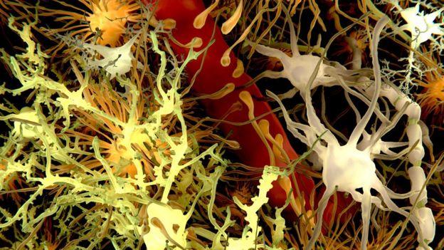 Células en el cerebro