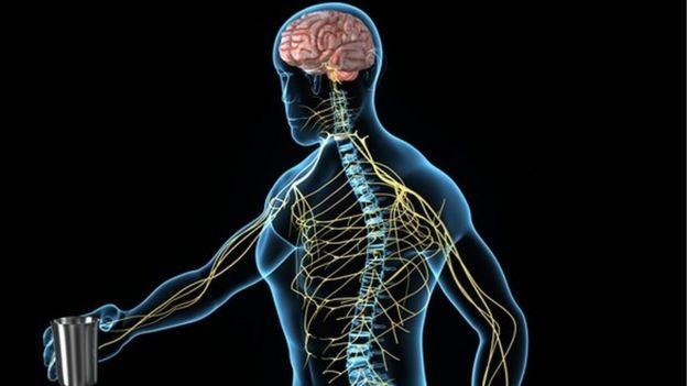 Imagen del sistema nervioso periférico