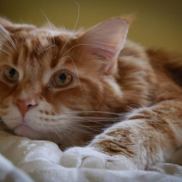 Omar the cat