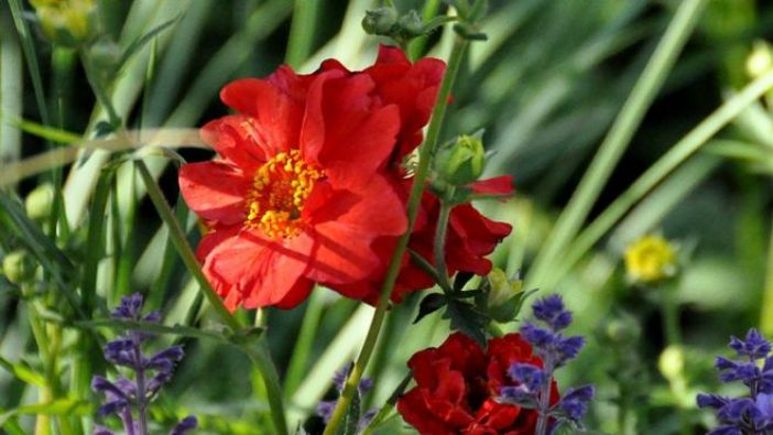 Chelsea Flower Show: Welcome to Yorkshire - God's Own Country - A Garden for Yorkshire