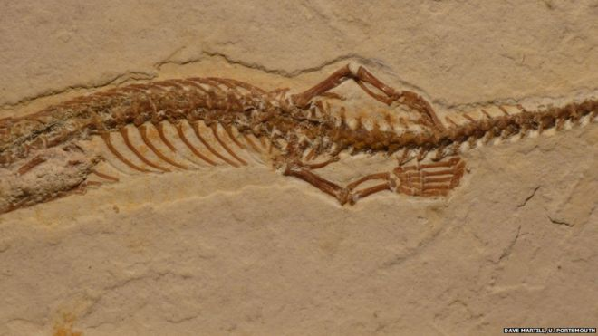 snake fossil with legs