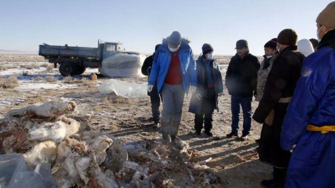Veterinary scientists examine saiga carcasses on the Mongolian grasslands