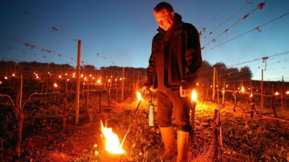 Candles at the Leckford Estate farm vineyard in Hampshire