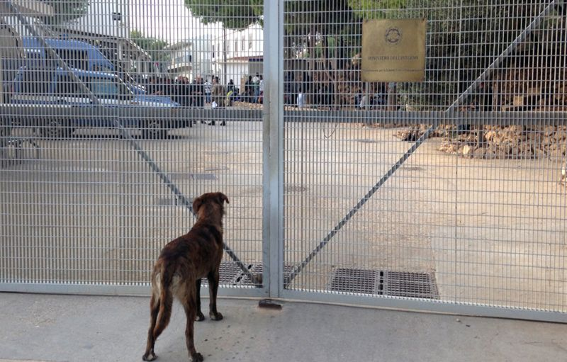 Dog outside Lampedusa reception centre