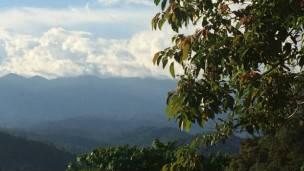 Selva malaya