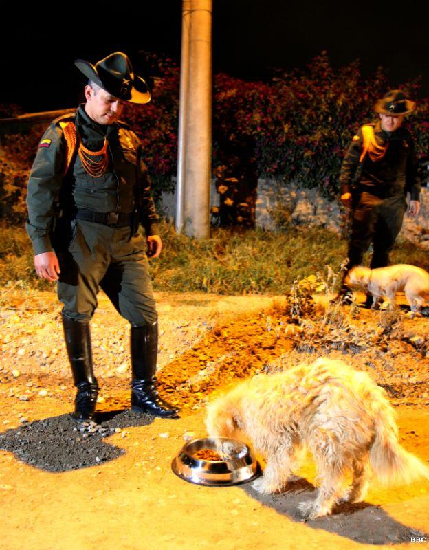 Otros policías alimentando perros