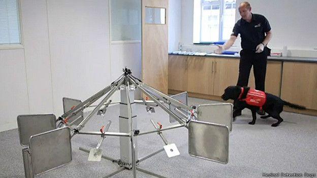 Perro de Medical Detection Dogs durante un ejercicio de entrenamiento