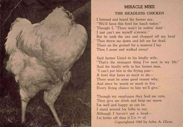 Pollo Mike