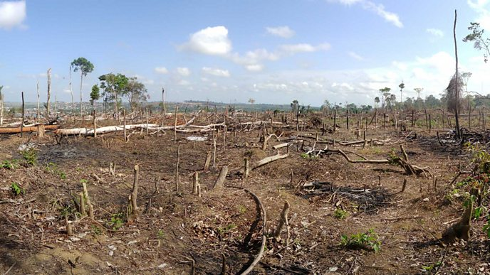 Area of illegal deforestation of vegetation native to the Brazilian Amazon forest
