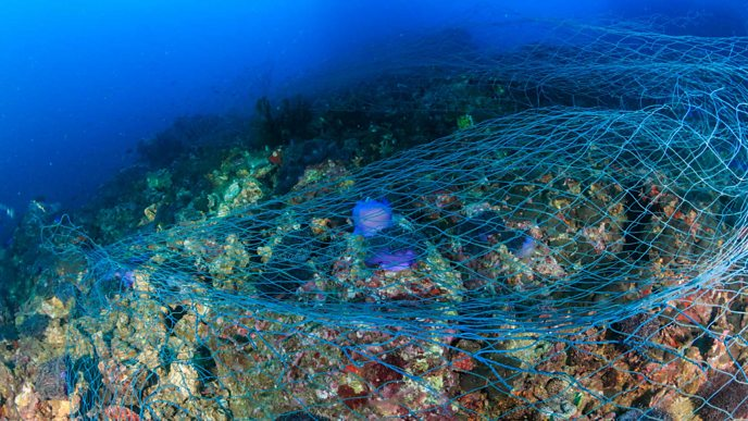 A fishing net sitting on the coral reef