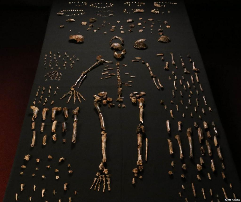_85448683_01-homo-naledi-bone-table-vertical-john-hawks-cc-by.jpg