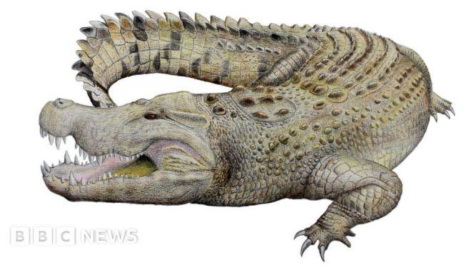 Australia crocodile: Skull identified as part of new extinct species #world #BBC_News