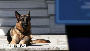 Joe and Jill Biden announce death of 'beloved' dog Champ #world #BBC_News