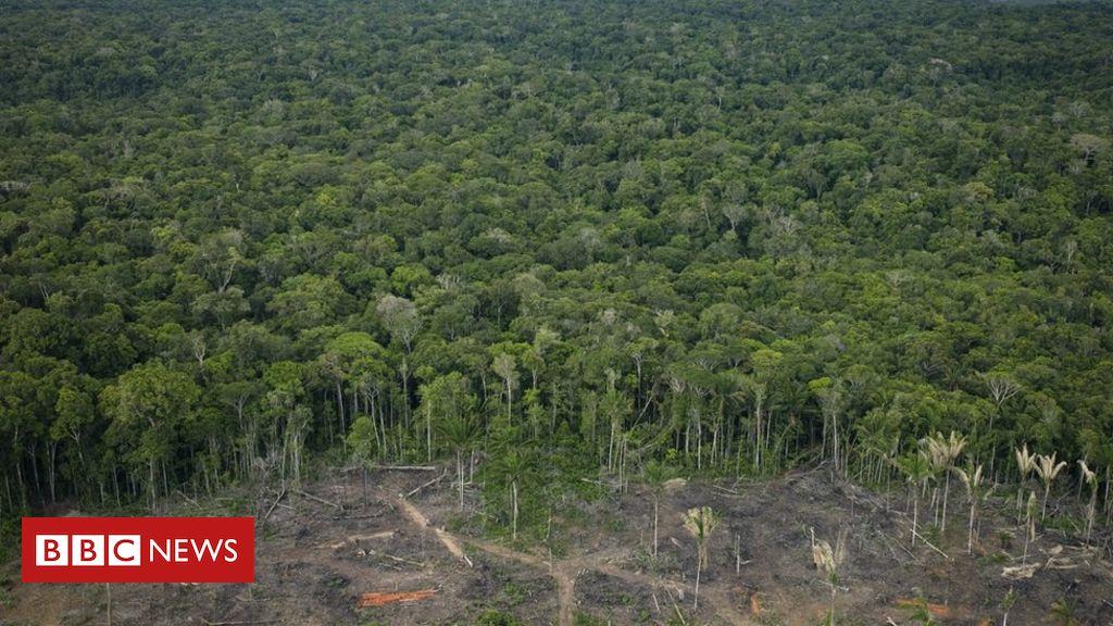 Professor de Harvard considera cenário polêmico: 'Quem vai invadir o Brasil para salvar a Amazônia?'
