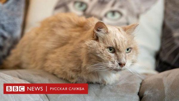 Кот Бисквит, ушедший из дому после смерти хозяйки ...