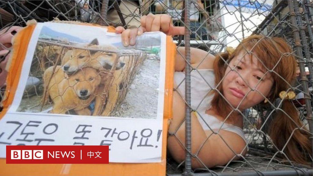 韓國一家狗肉市場被禁止屠宰狗 - BBC News 中文