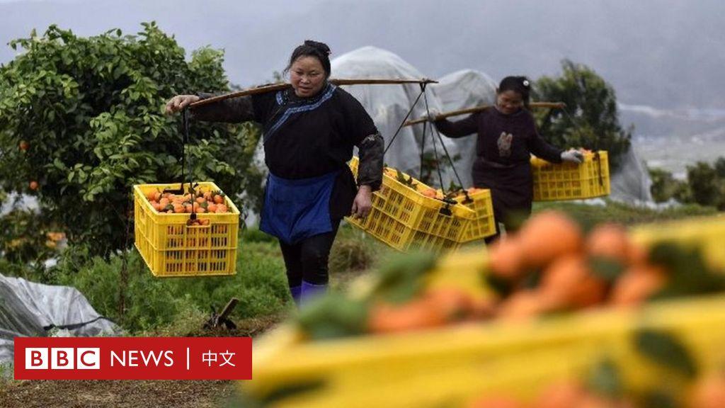 """中国扶贫创造""""人间奇迹""""三个关键人物揭示奥秘-BBC新闻"""