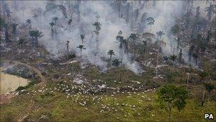 According to the world carfree. Brazil Amazon Rainforest Deforestation Rises Sharply Bbc News
