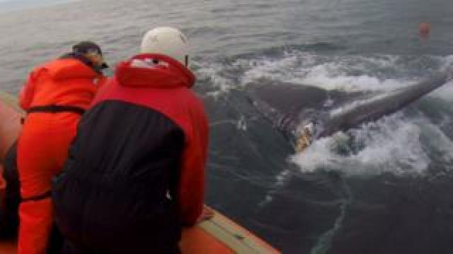Mackie Greene on his whale rescue boat