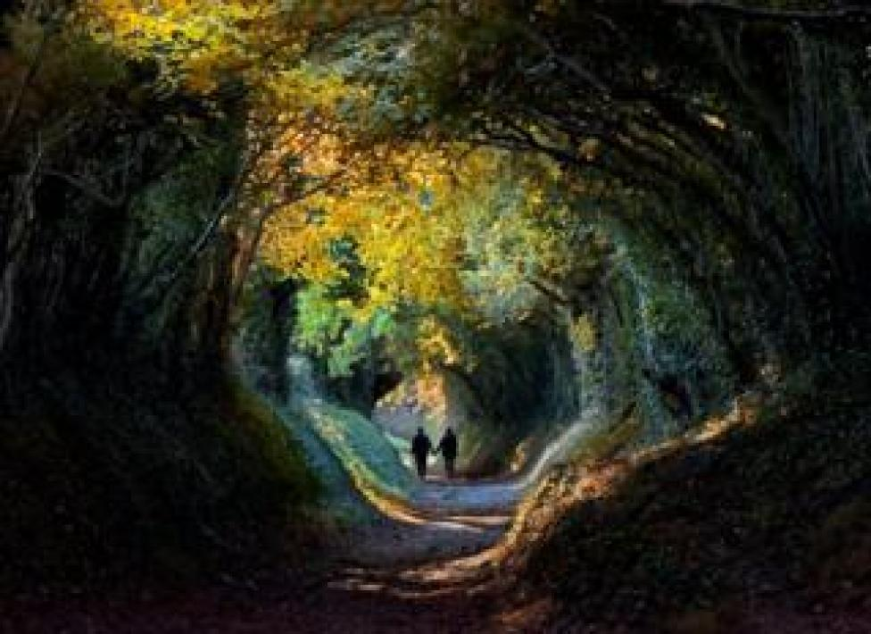 trump Tree tunnel with people walking through