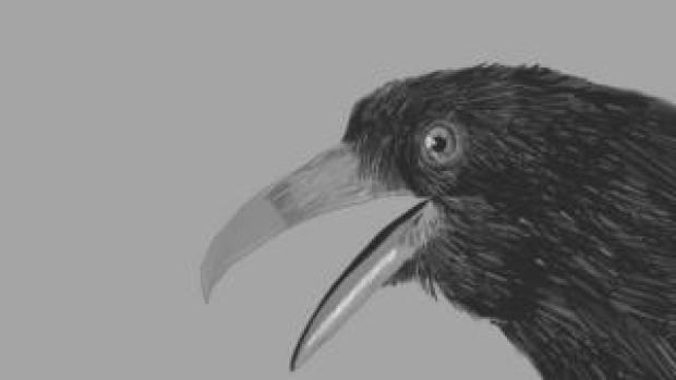 A crow in the video for A Ghost