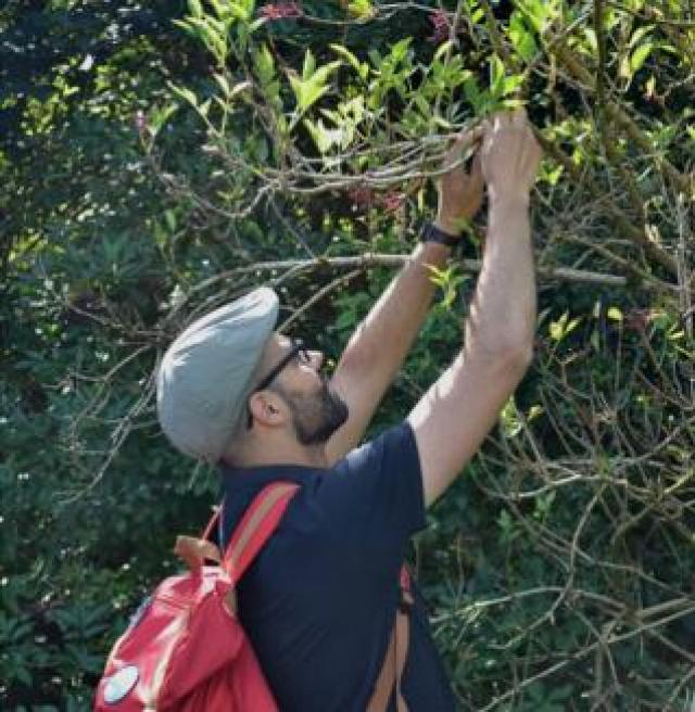 Fabio Godinho harvests crops from an elder tree.