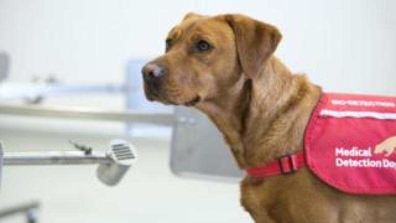 A medical detection dog