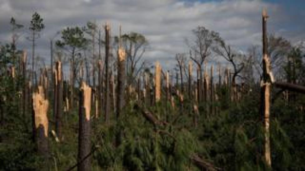 NEWS Inland trees were snapped by winds in Marianna