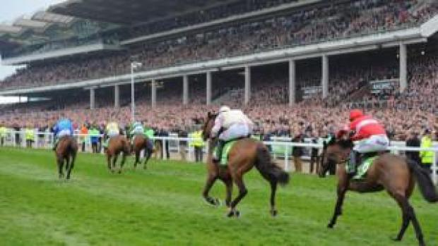 Horses running at Cheltenham