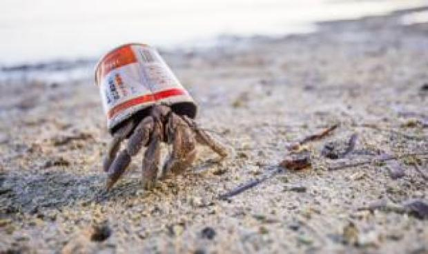 Shane Keena won the Conservation category with a shot of a hermit crab on Peleliu Island using a discarded can as a temporary home.