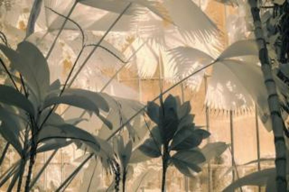 A view of plants in shades of cream and green