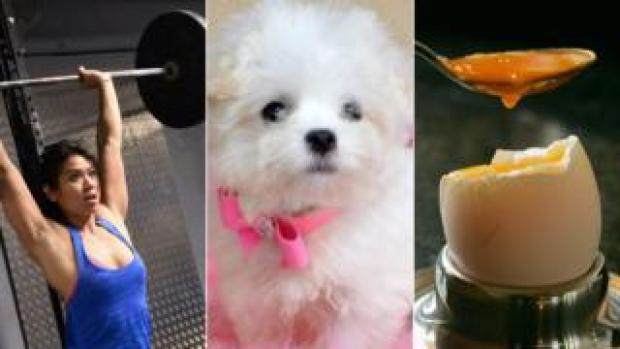 female weight lifter, a dog, a boiled egg