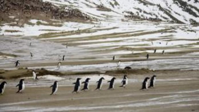 Penguins on Seymour Island, Antarctica