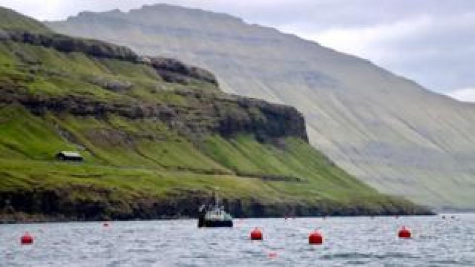Seaweed farming Faroe Islands