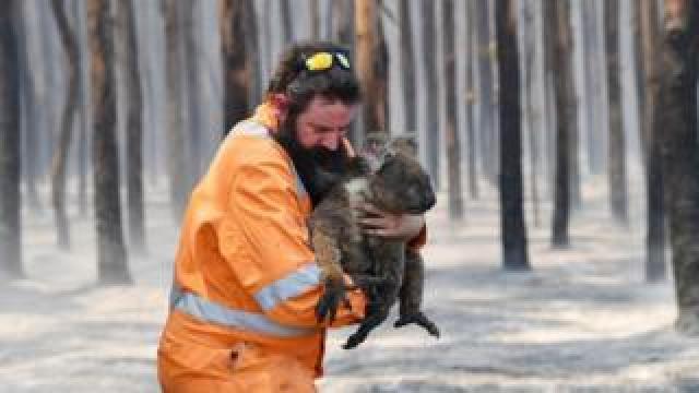 Adelaide wildlife rescuer Simon Adamczyk holds a koala he rescued at a burning forest near Cape Borda on Kangaroo Island, Australia
