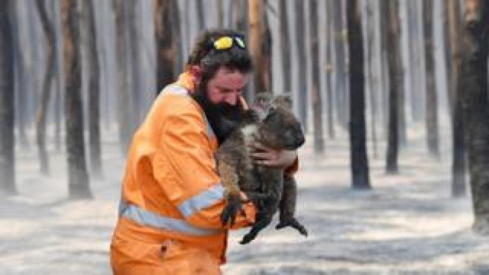 trump Adelaide wildlife rescuer Simon Adamczyk holds a koala he rescued at a burning forest near Cape Borda on Kangaroo Island, Australia