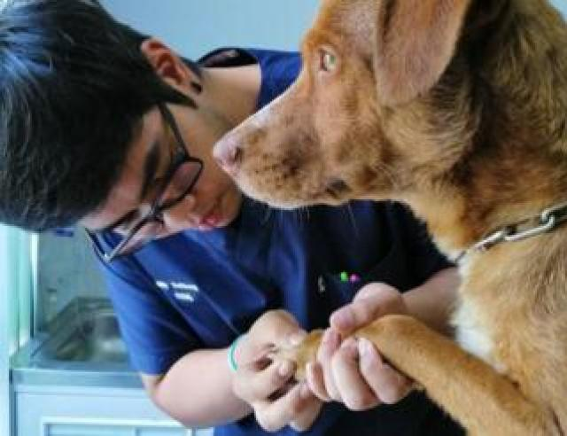 The dog recieved a check-up at a veterinary practice in southern Thailand