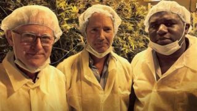Three MPs in a cannabis farm in white suits