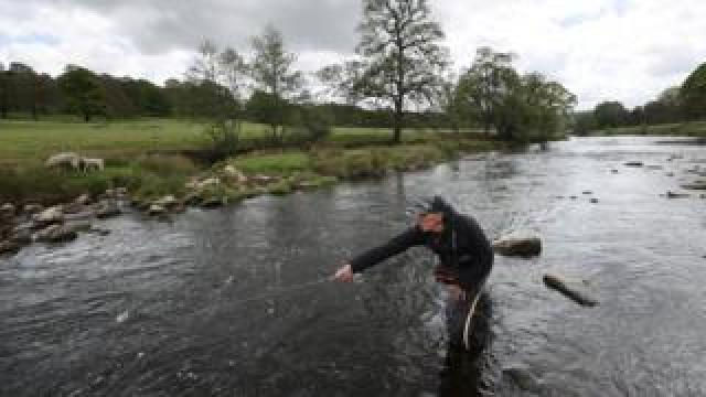 A man is seen fly fishing in the River Derwent