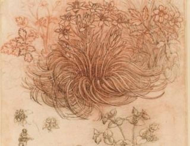 """A drawing by Leonardo da Vinci labelled """"Star of Bethlehem and other plants"""", on loan to the Louvre from Queen Elizabeth II"""