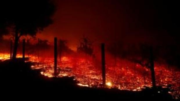 A vineyard burns overnight during a wildfire that destroyed dozens of homes in Thousand Oaks, California