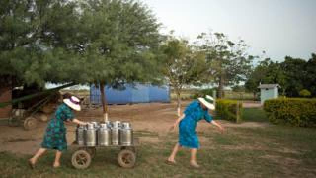 Mennonite women transporting milk