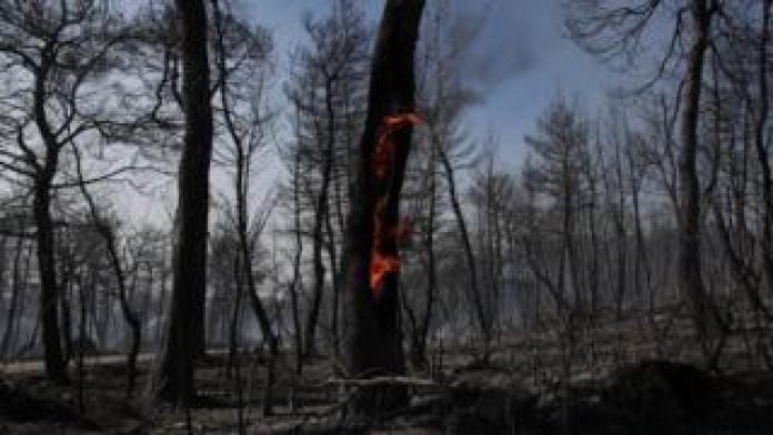 Un tronc d'arbre isolé reste en feu au milieu d'une forêt noircie à la suite d'un incendie
