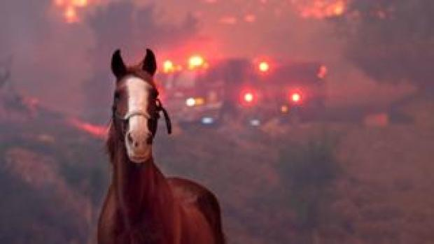 Horses are spooked as the Woolsey Fire moves through the property on Cornell Road near Paramount Ranch