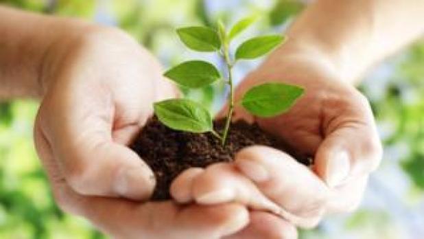 Gadgets: baby tree in hands