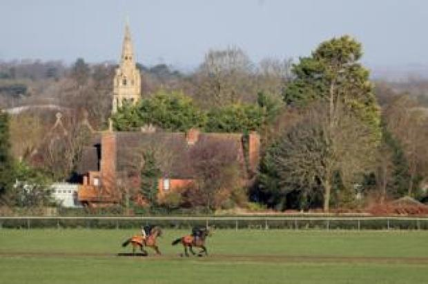 Horses on the gallops in Newmarket