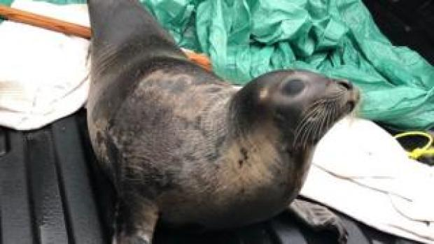 An image of a captured seal provided by the local police